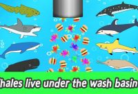 maxresdefault 202 200x137 - [EN] Whales live under the wash basin 2, kids animals animation, whales adventureㅣCoCosToy